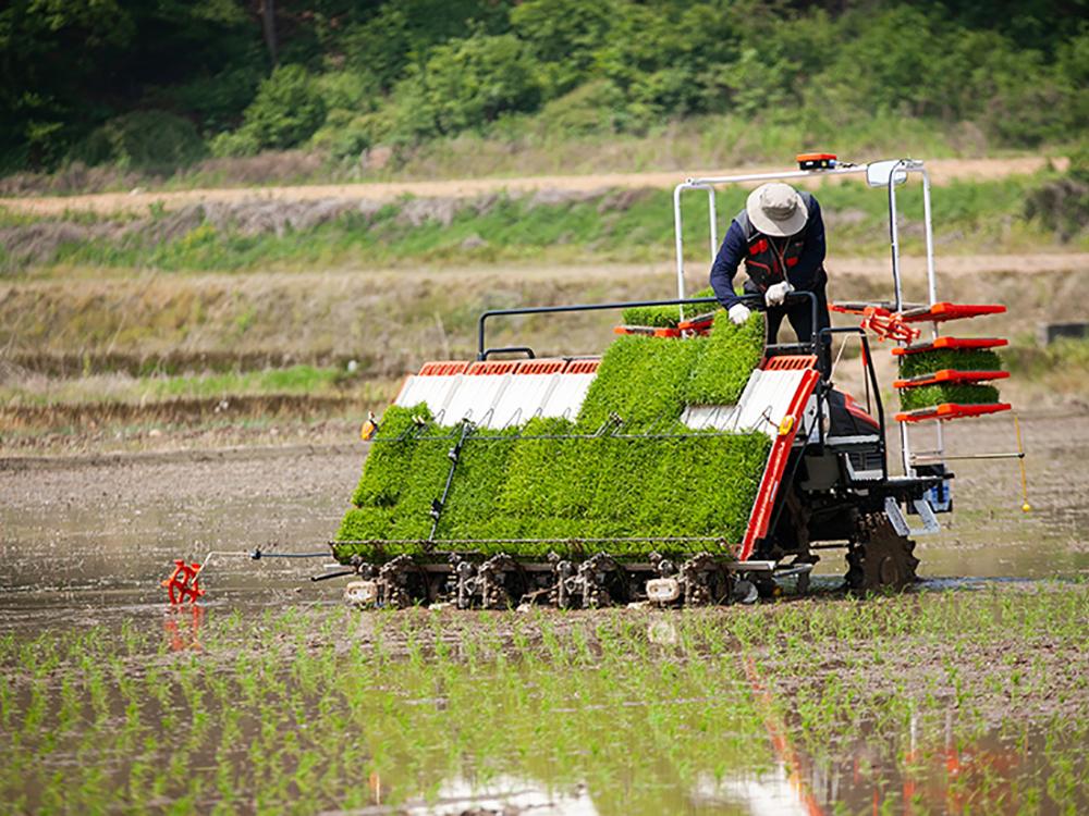 농번기에 발생하는 이앙기 사고